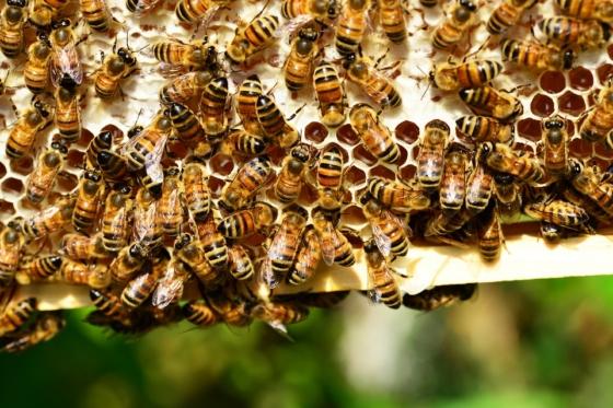 big bees on frame
