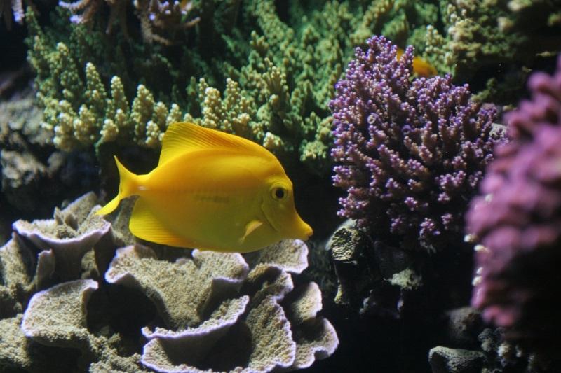 Marine Bio Prospecting Featured